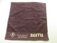 BEETLE_1